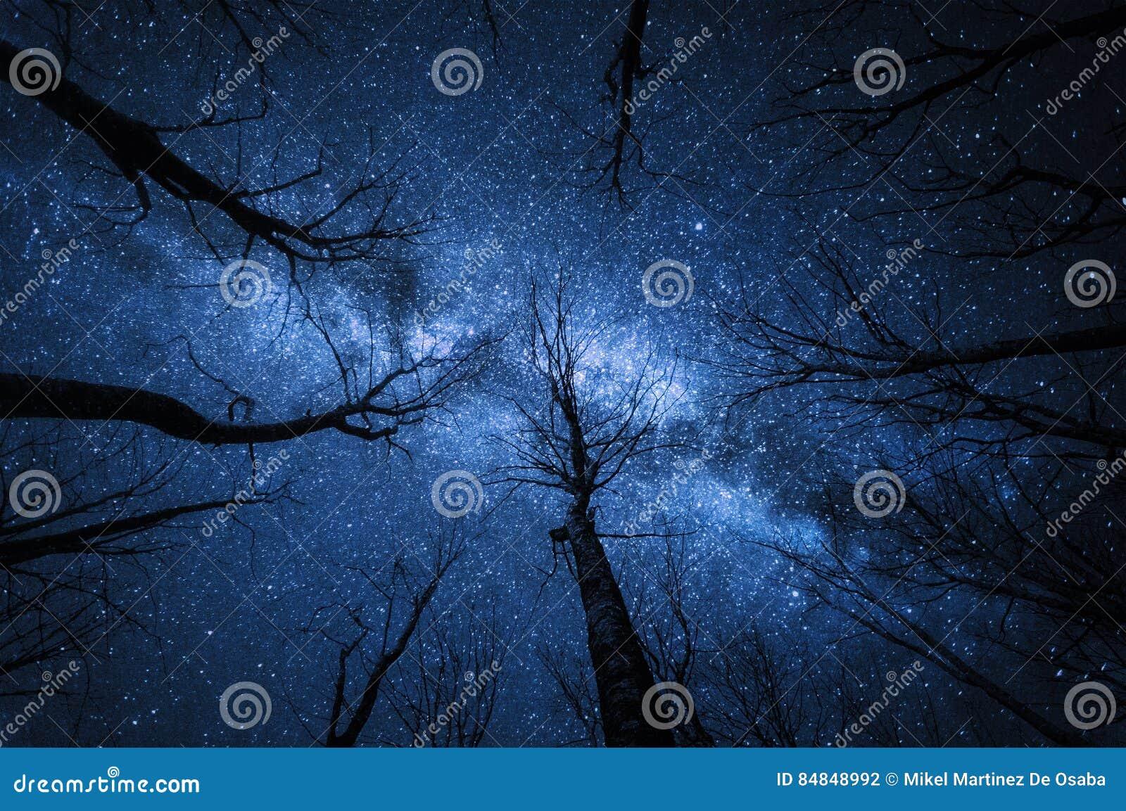 Via Lattea nella foresta alla notte stellata