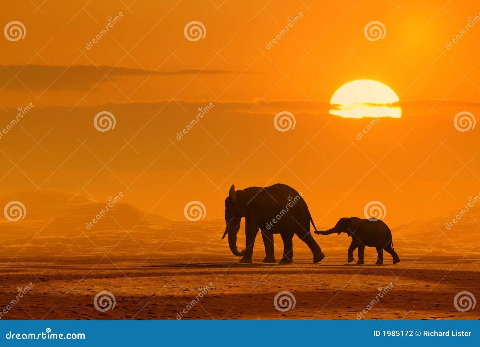 Viagem dos elefantes
