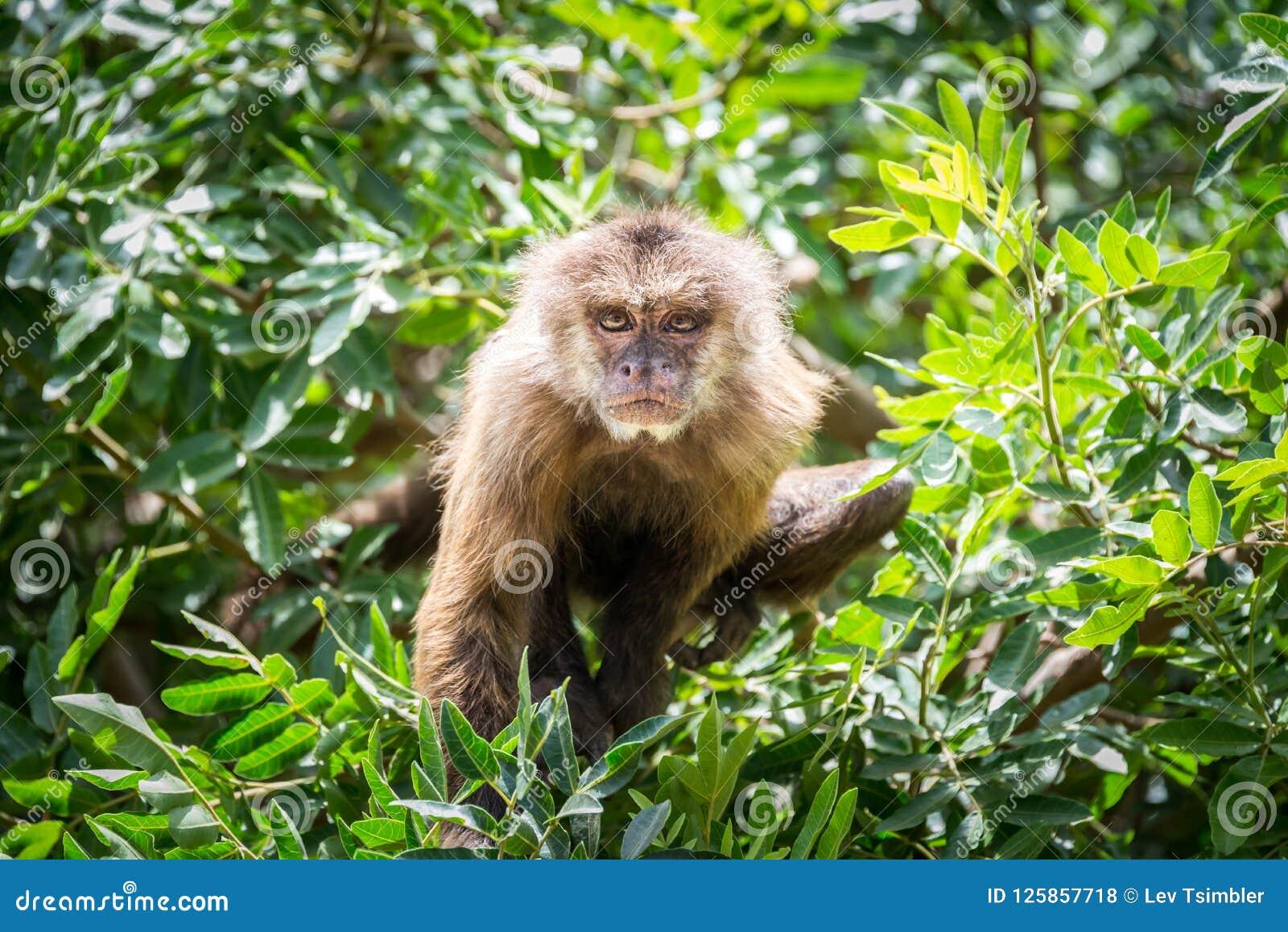 Viaje de la mañana en Ramat Gan Safari Park