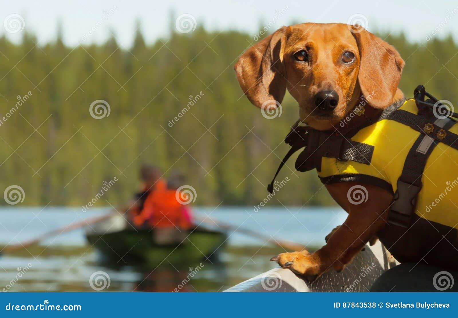 Viaje del barco del perro