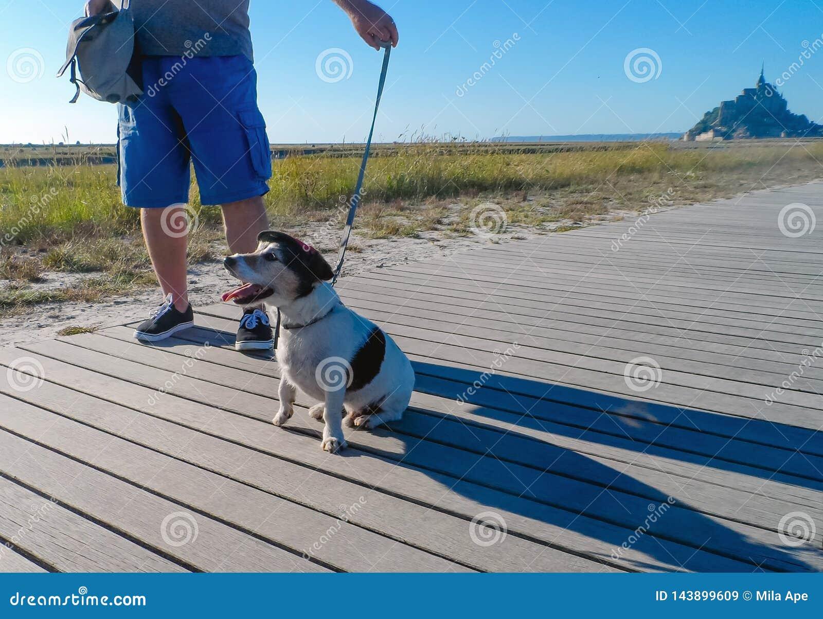Viajero elegante del perro en Mont Saint-Michel France
