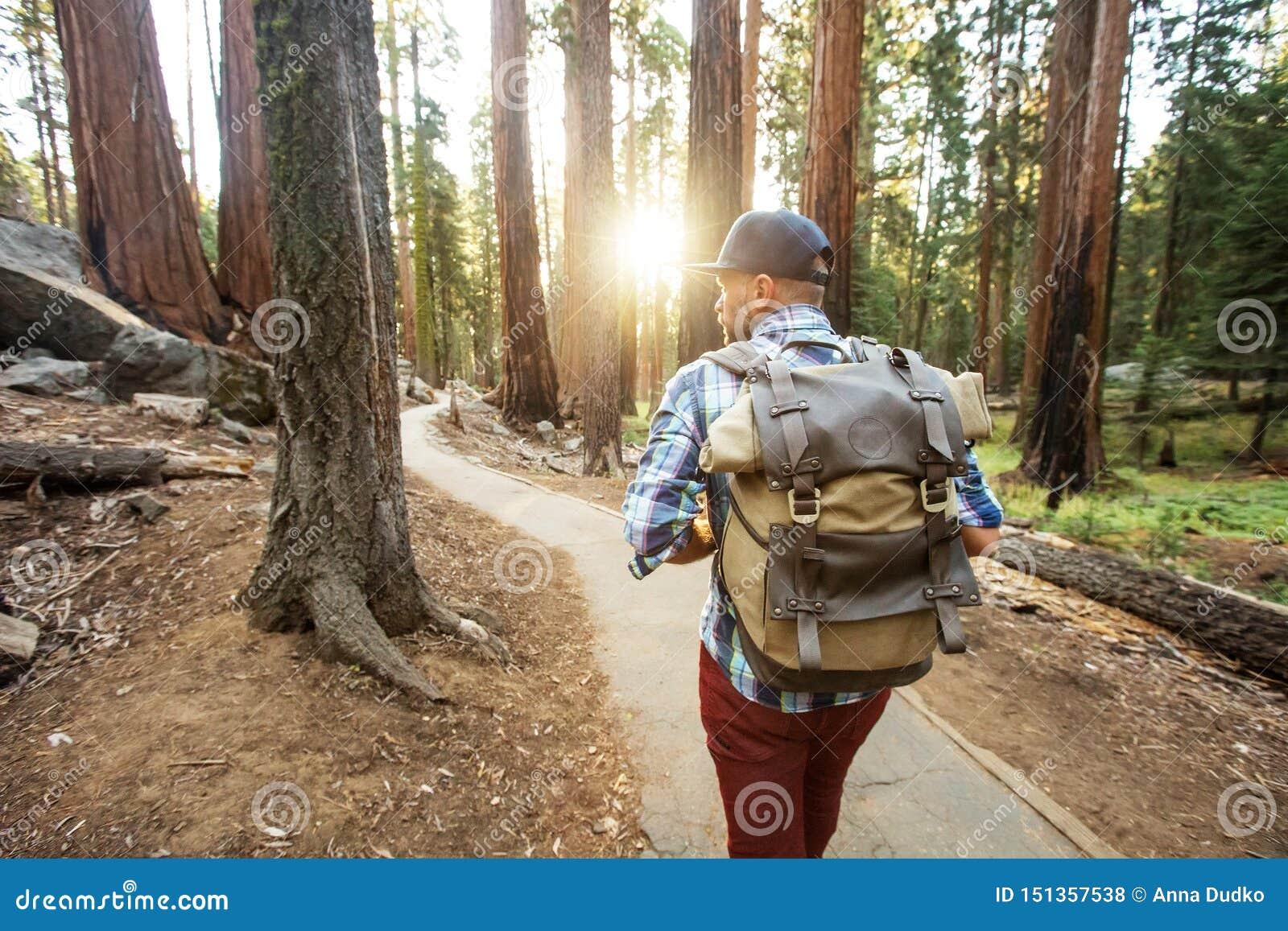 Viandante nel parco nazionale della sequoia in California, U.S.A.