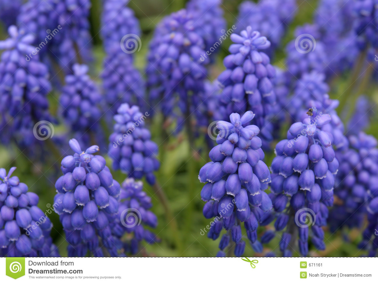 Blue and purple flowers images comousar blue and purple flowers images blue and purple flowers izmirmasajfo
