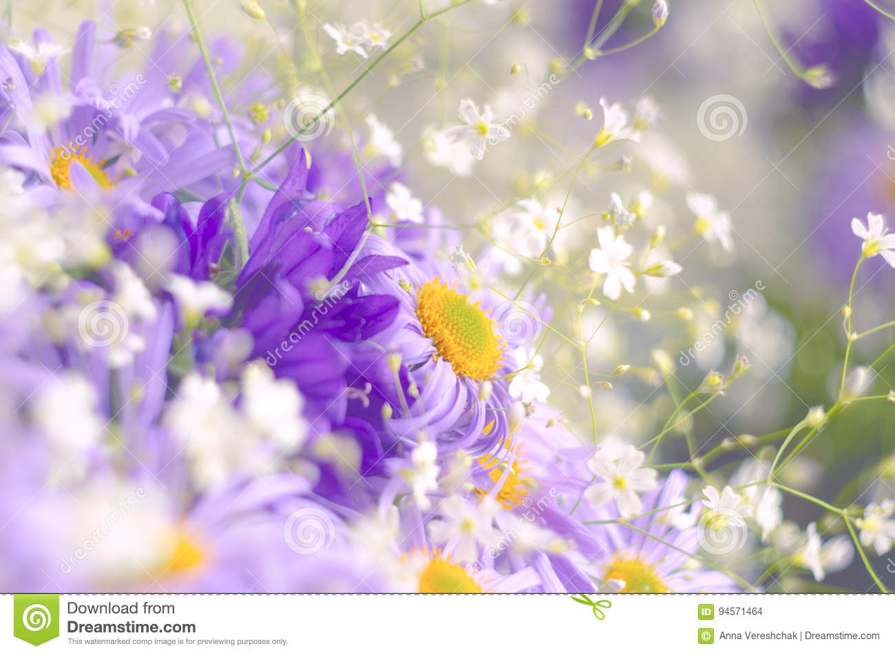 Vibrant Bright Purple Daisy Flowers Spring And Summer Flowers Stock