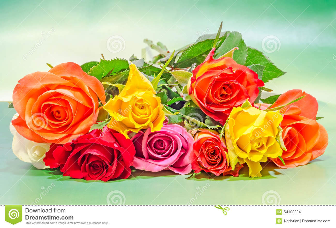 Vibrant Colored (red, Yellow, Orange, White) Roses Flowers, Close Up ...