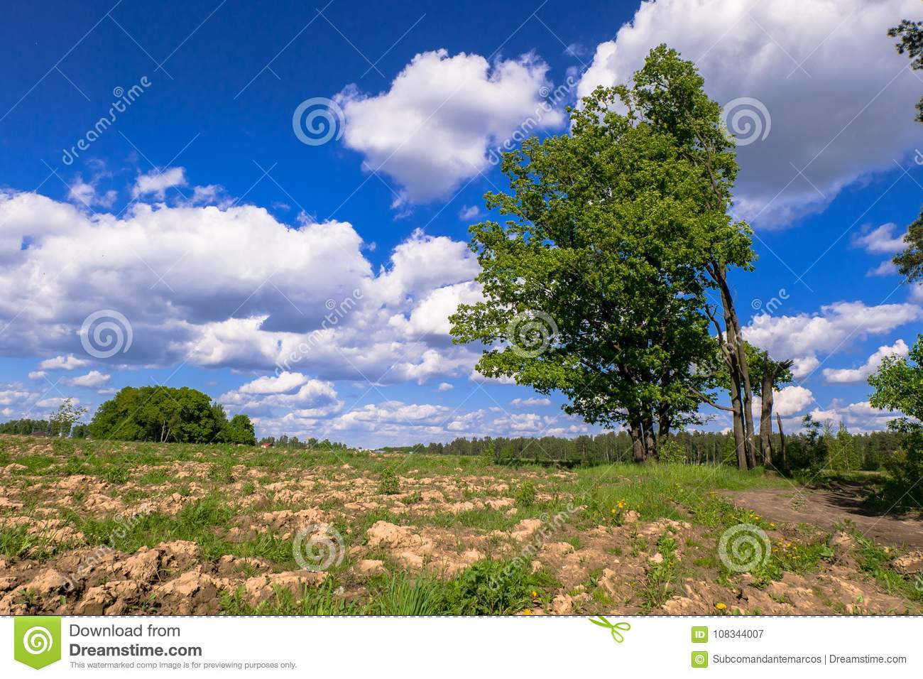 Sunny landscape of the countryside in the beginning of summer.