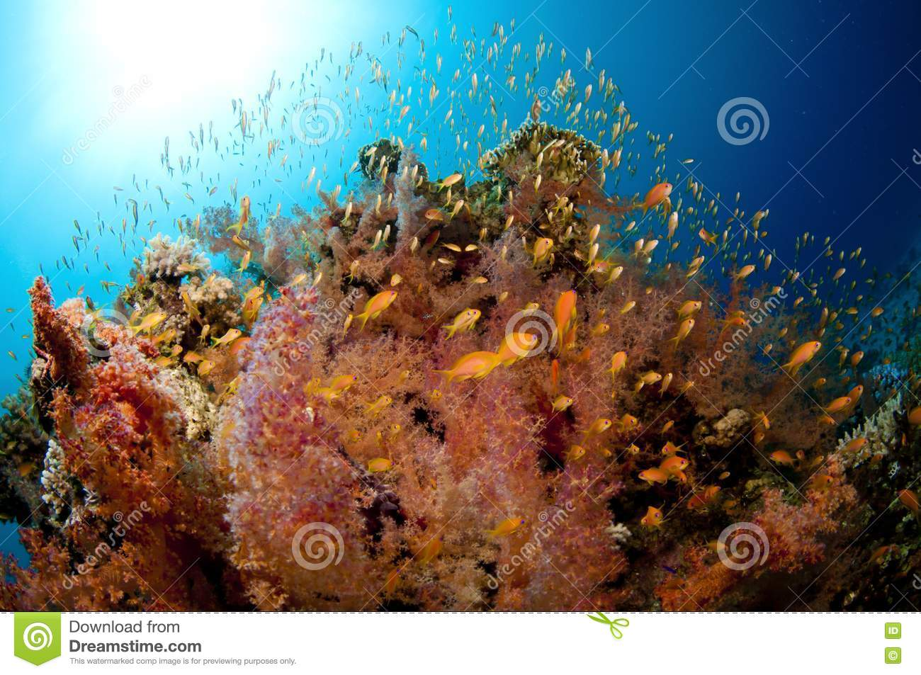 Vibrant coral reef with lots of fish royalty free stock for Lots of fish