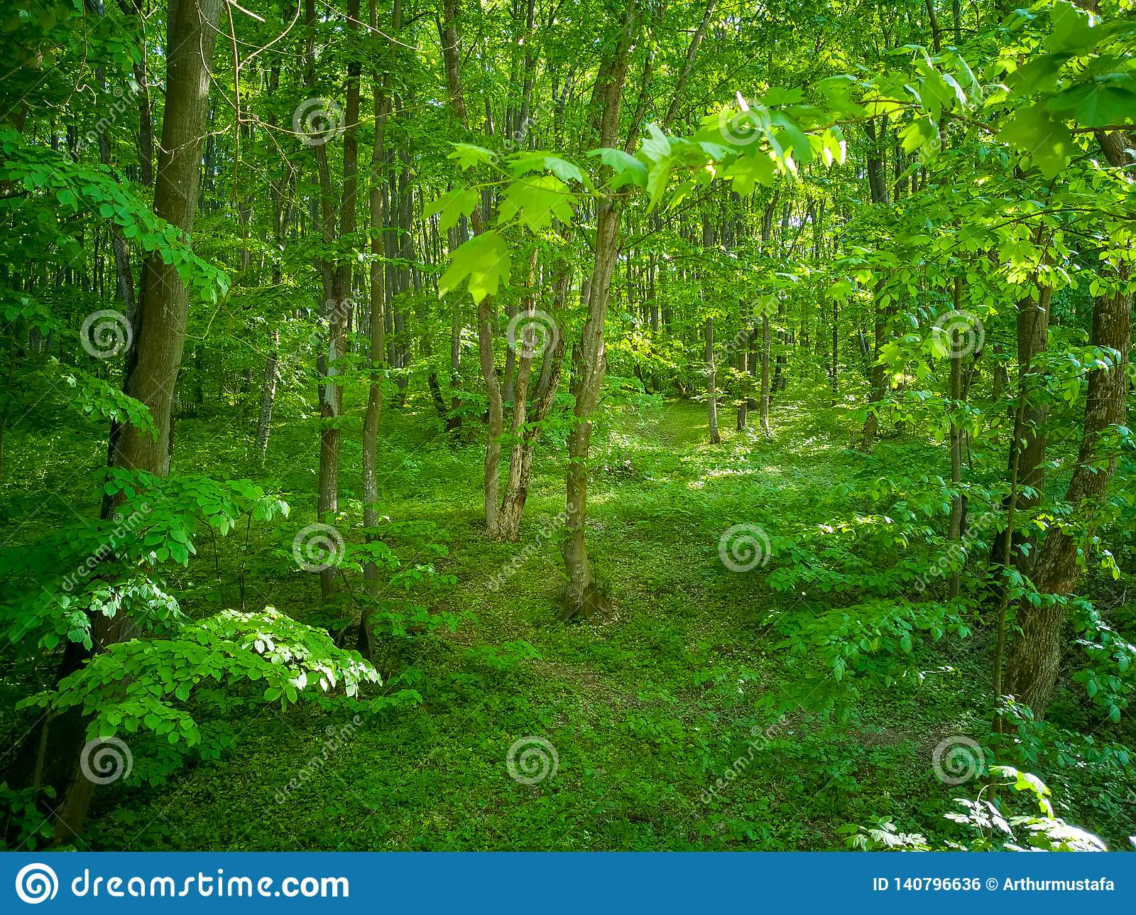 Vibrant green forest full of life under the spring warm sunlight. Spring nature perfect background, beautiful landscape of a lush