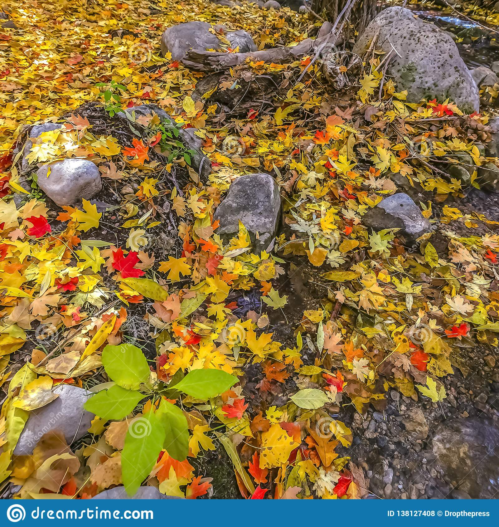 Vibrant leaves on a rocky ground in Salt lake City