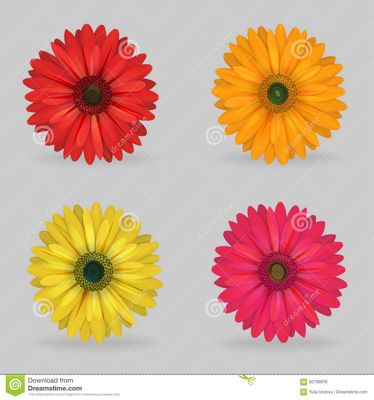 Vibrant Multi Color Lovely Gerbera Daisy Flowers Stock Vector