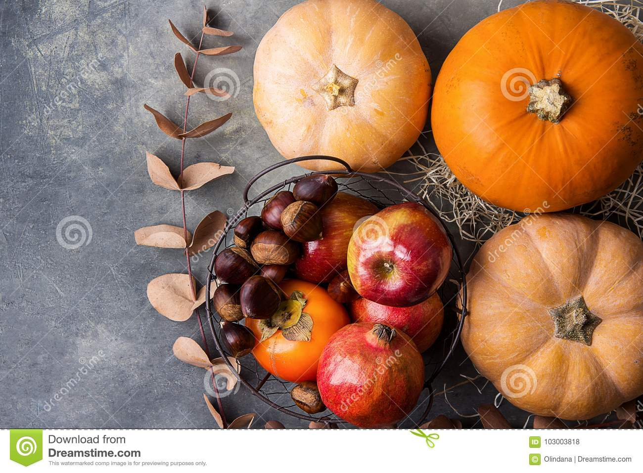 Vibrant Orange Color Pumpkin Ripe Organic Red Glossy Apples Pomegranates Chestnuts Persimmons Dry Autumn on Grey Stone Background.