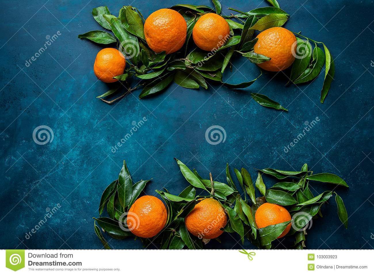 vibrant orange tangerines on branches green leaves arranged in composition border frame on dark blue background