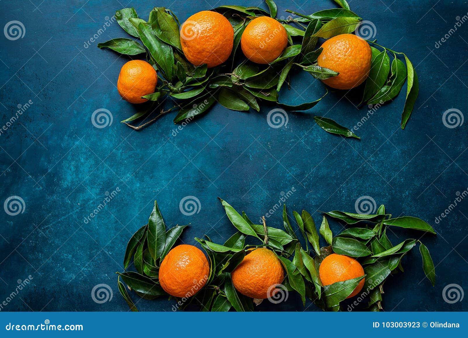 vibrant orange tangerines on branches green leaves arranged in composition border frame on dark blue background