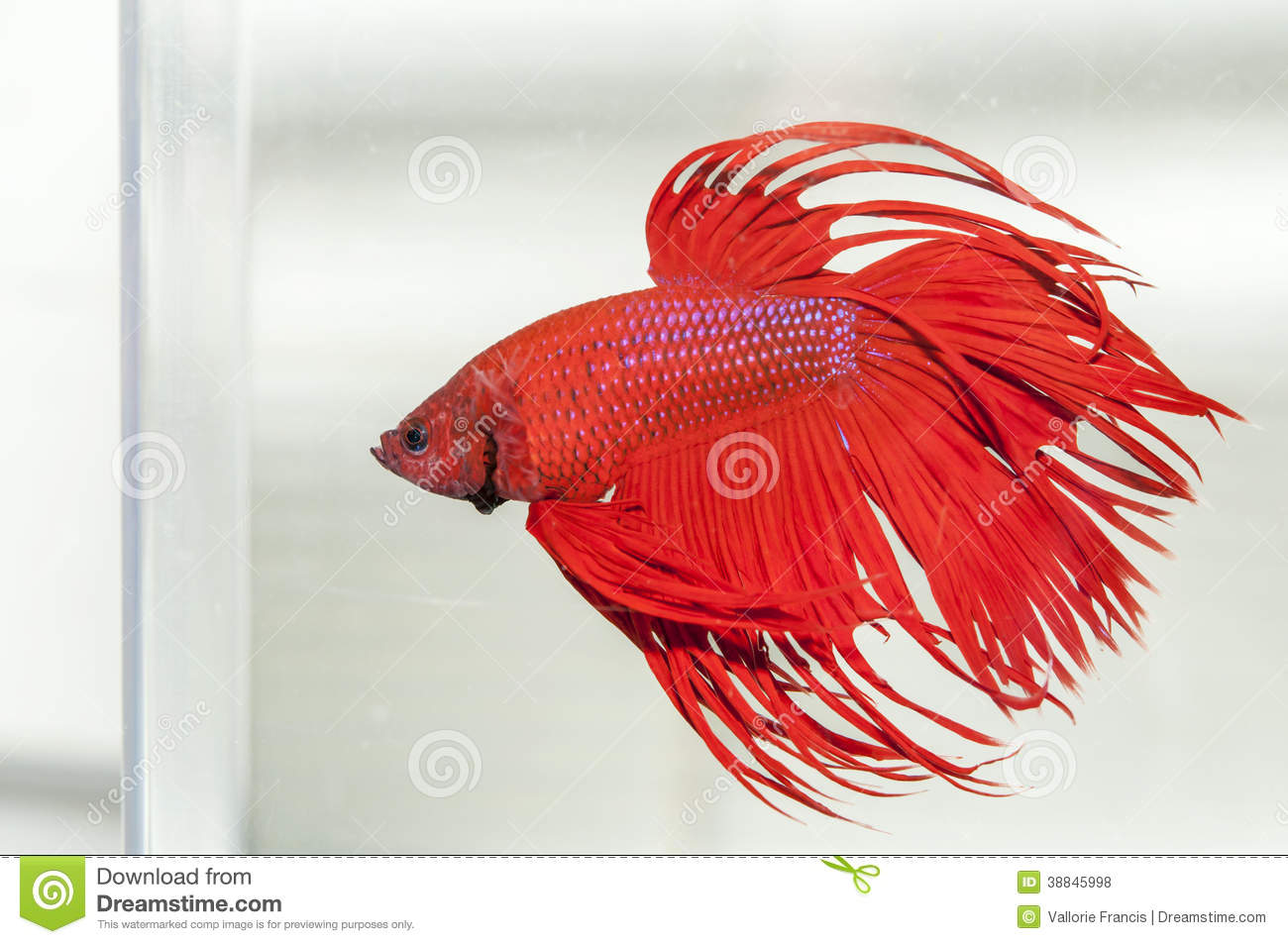 download poisson clear fish - photo #29