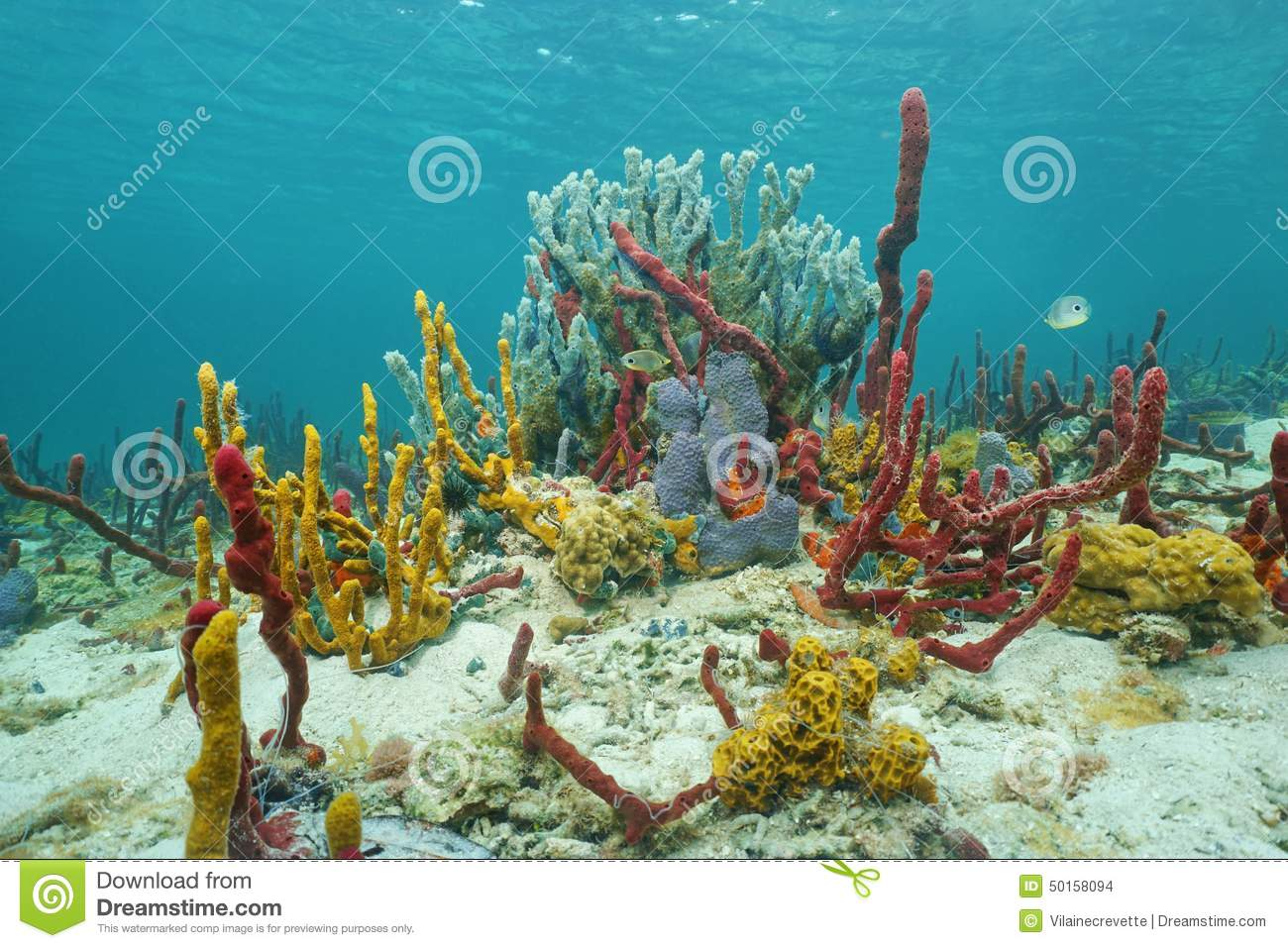 Vibrant Caribbean: Vibrant Underwater Life With Sea Sponges On Seabed Stock
