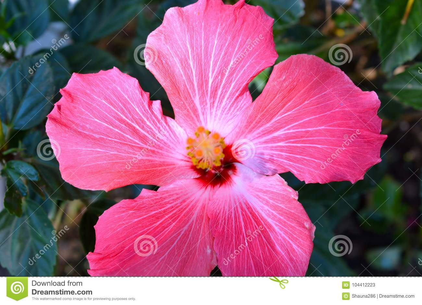Summer rose alive