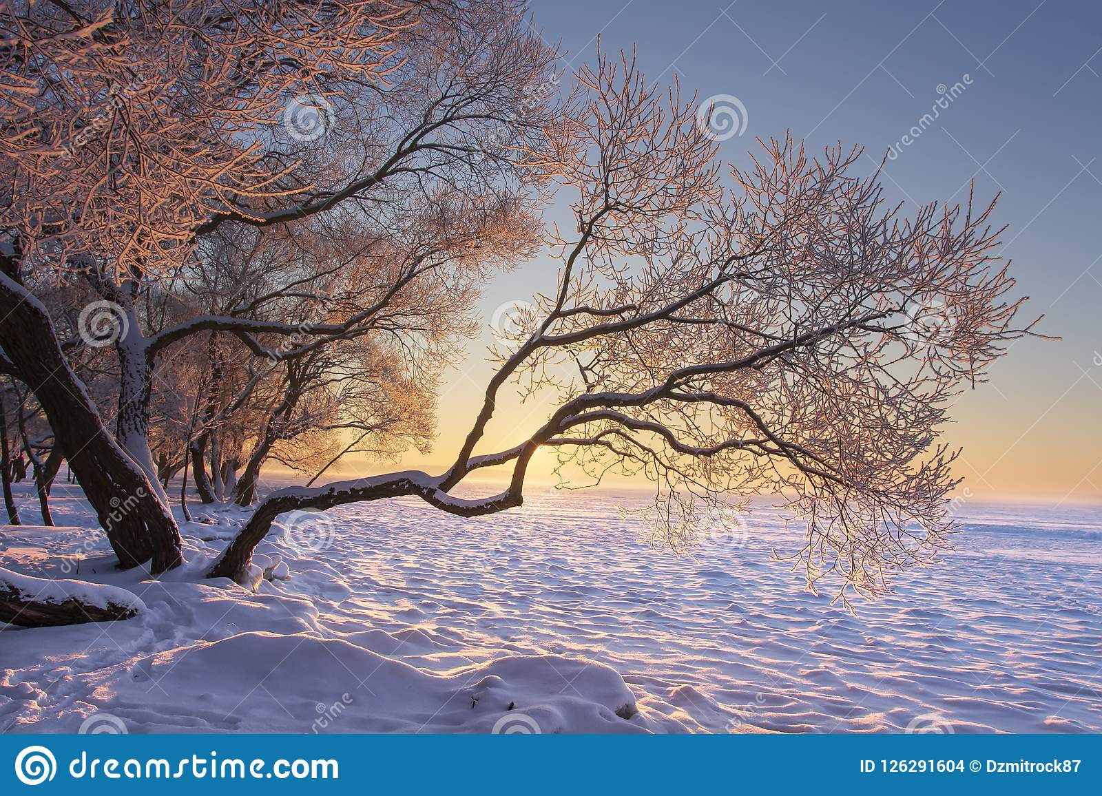 Vibrant winter landscape at morning sunrise with yellow sunlight. Snowy trees on froze on lake shore. Nature winter scene