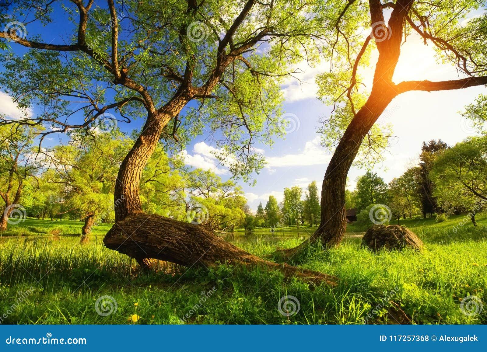 Vibrerande landskap för sommar