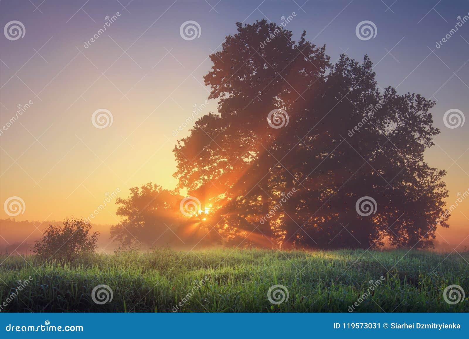 Vibrerande naturligt landskap för sommar av morgonnaturen på lugna äng med varma solstrålar till och med trädfilialer