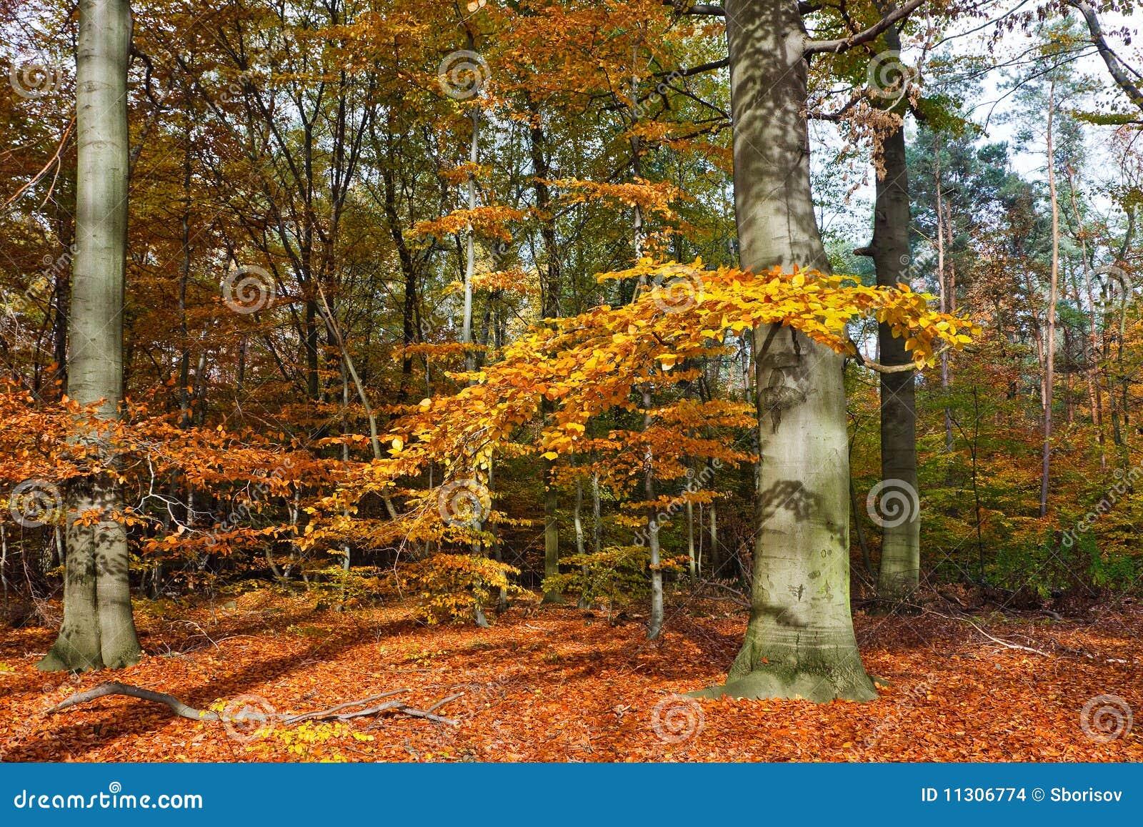 Vibrierendes Bild des Herbstwaldes