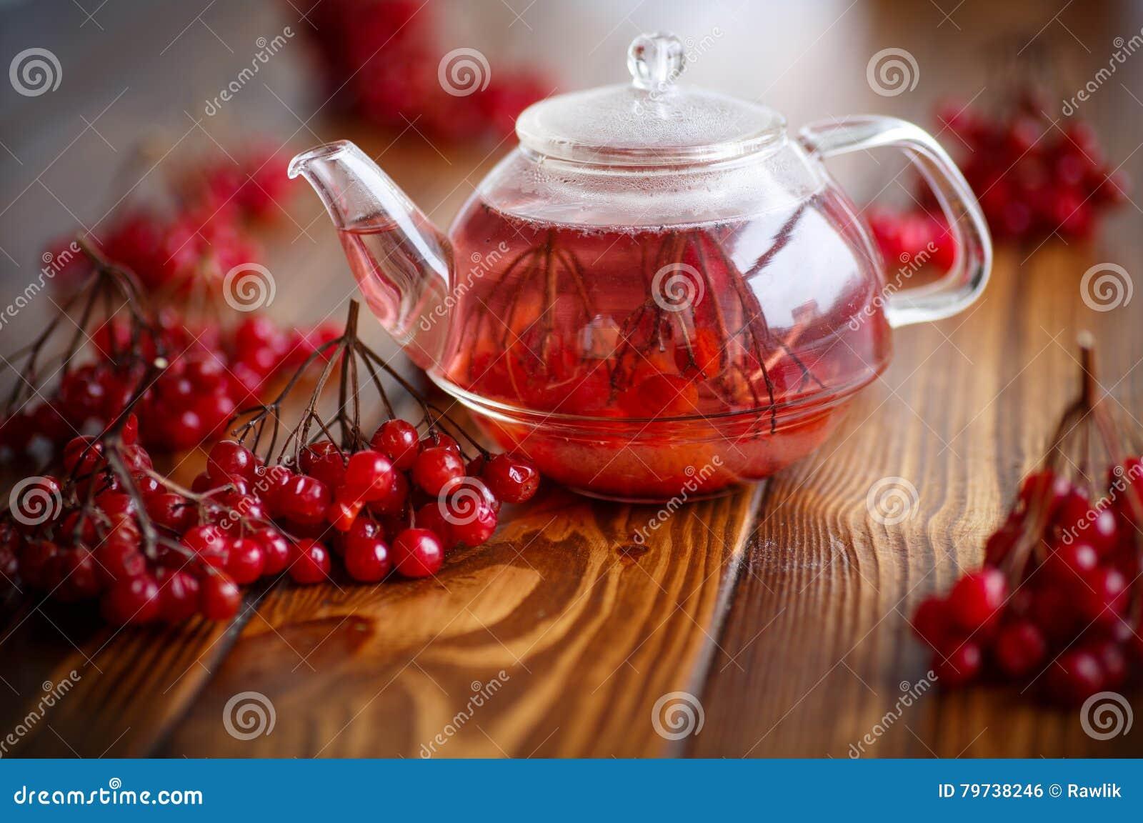 Viburnum caliente del té en el pote de cristal