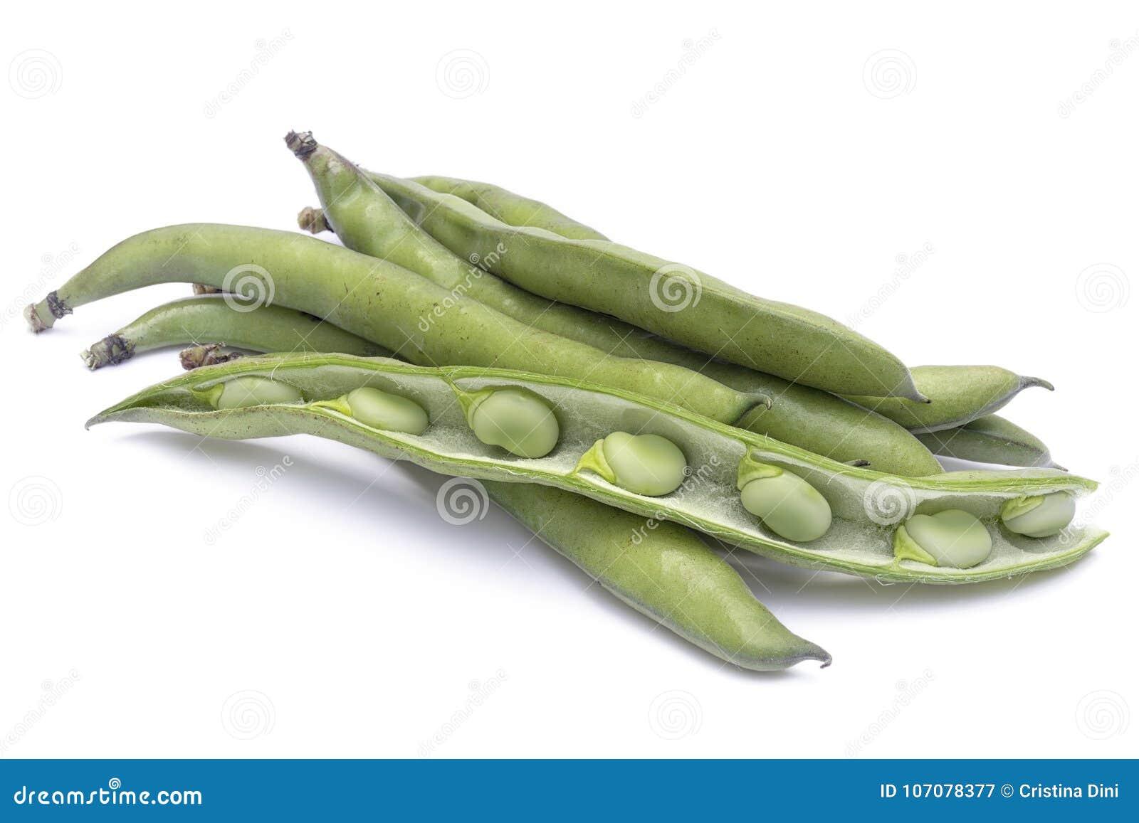 Vicia faba varietà delle fave maggiore in baccelli e semi