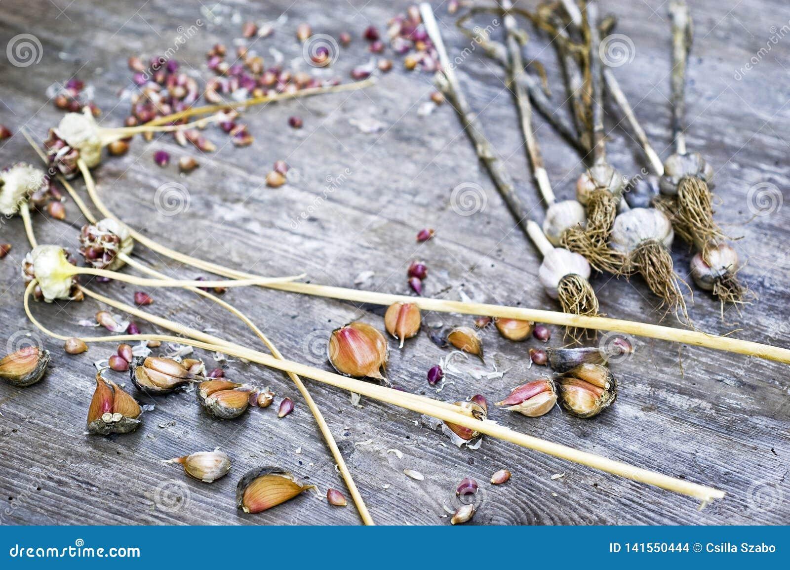 Vicino su, colpo superiore delle lampadine dell aglio delle pelli asciutte, chiodi di garofano, colori bianchi, arancio, porpora,