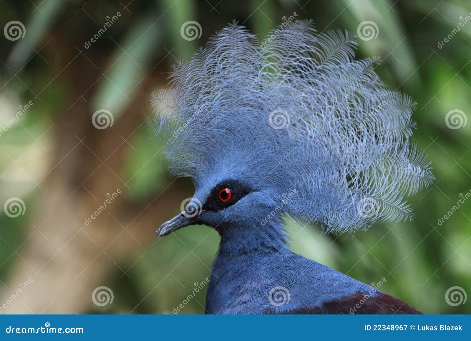 Victoria coronó la paloma