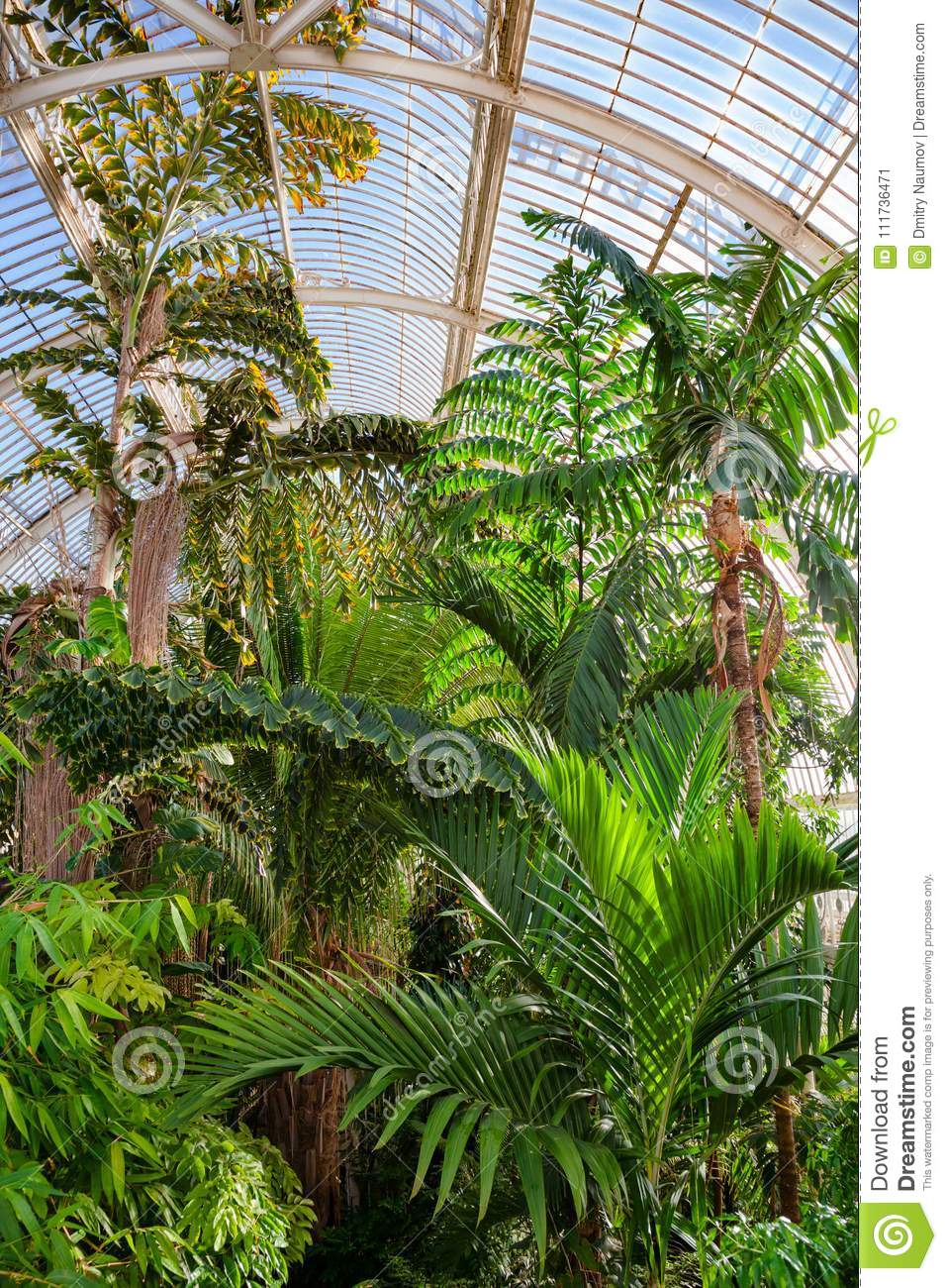Tropical Plants At Palm House Greenhouse In Kew Gardens Southwest