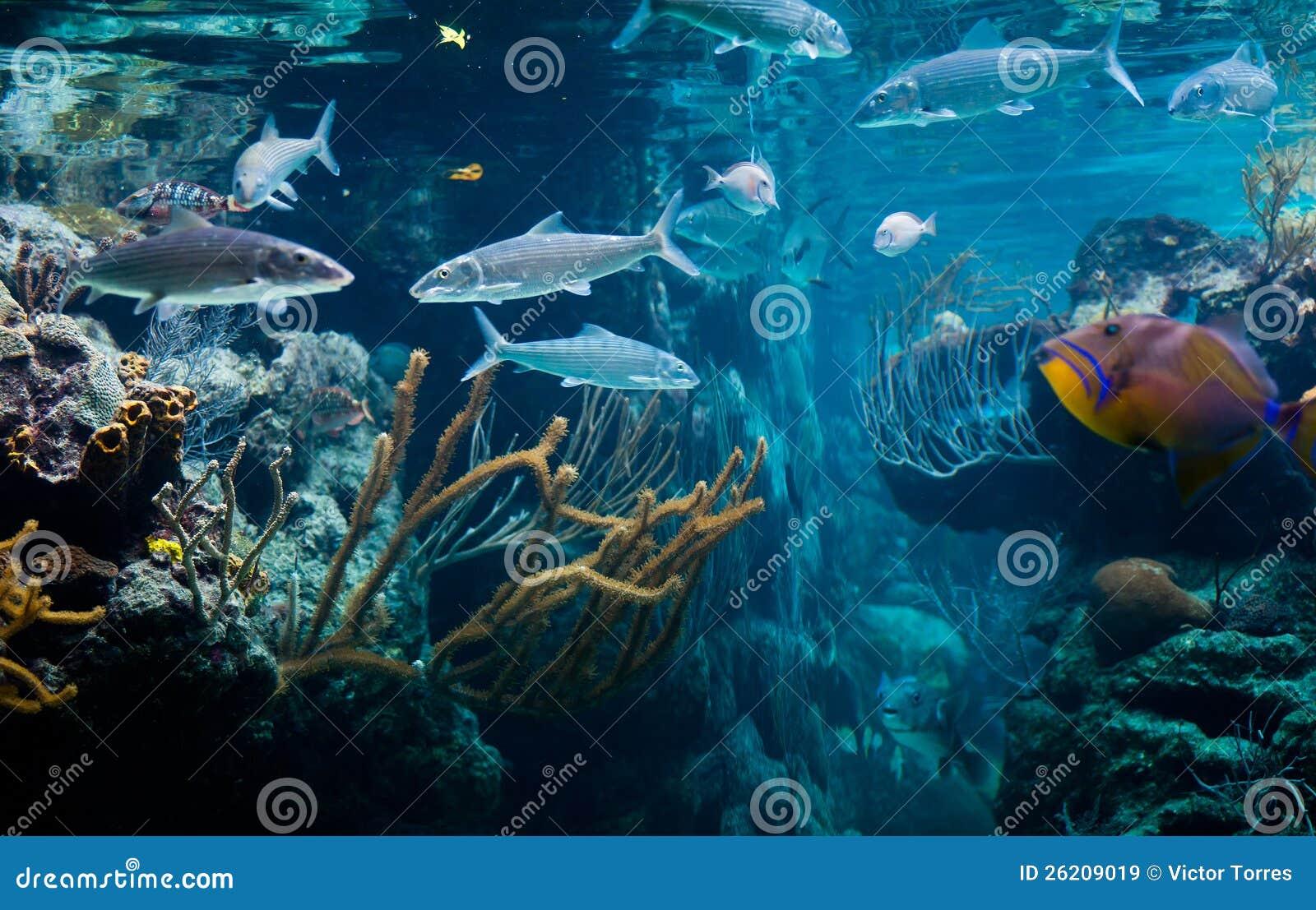 Vida de mar do Cararibe