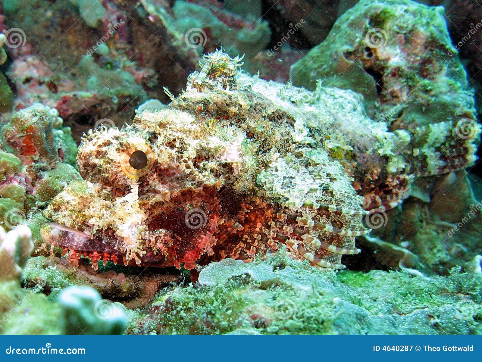 Vida de mar no recife coral
