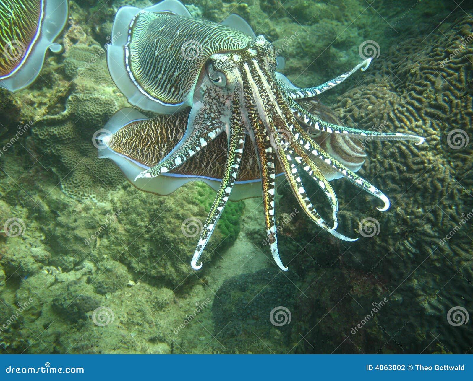 Vida de mar tropical