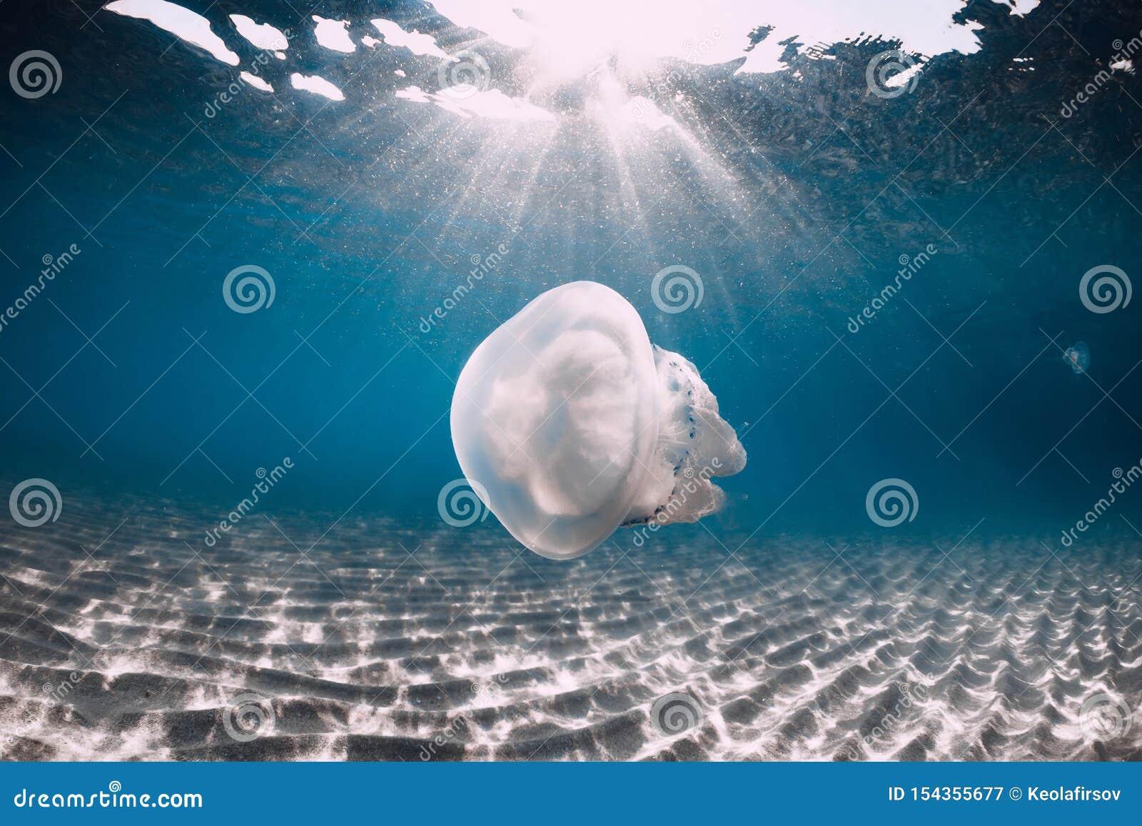 Vida marina con el submarino de las medusas en el mar azul con la parte inferior arenosa