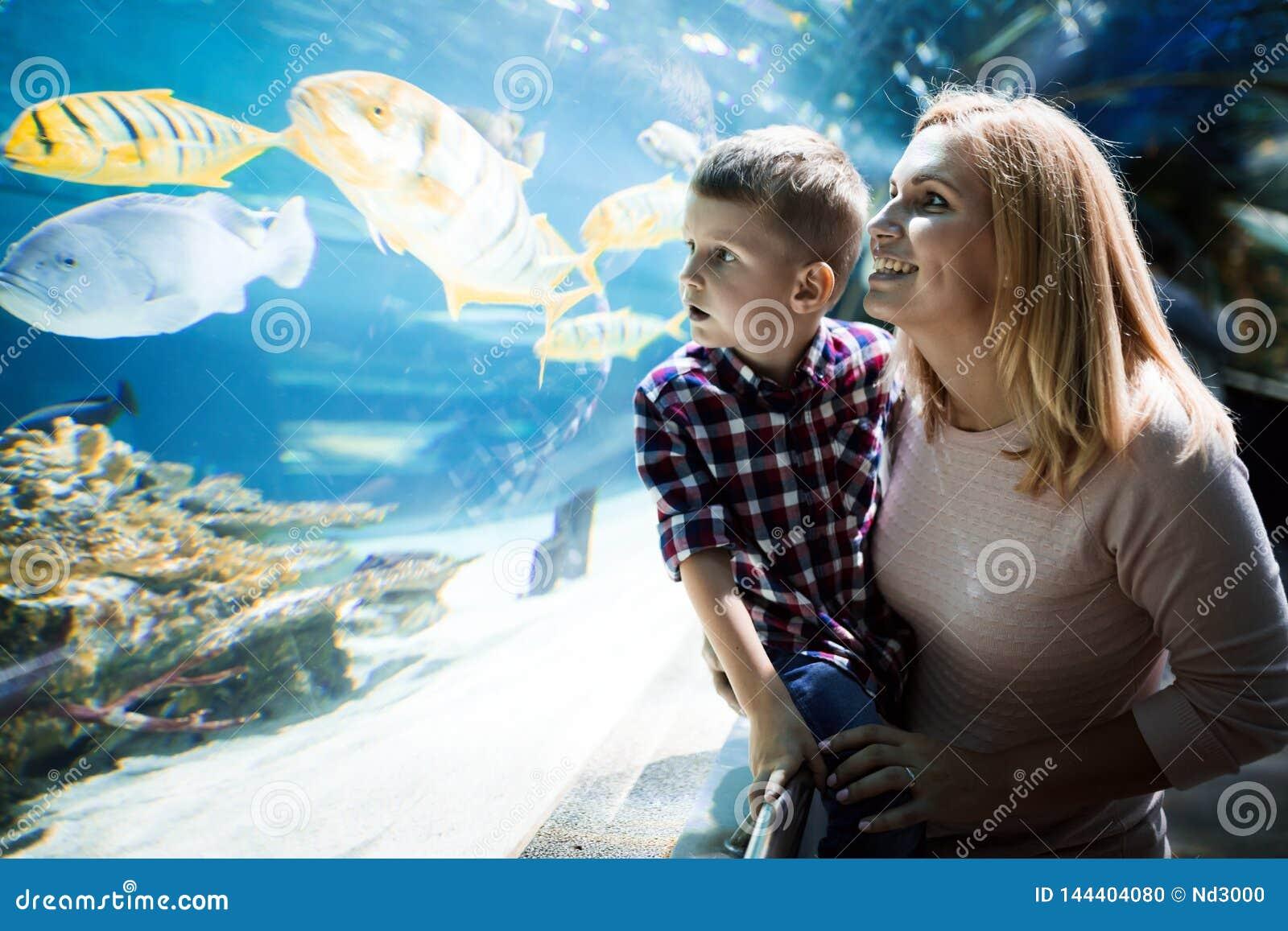 Vida marina de observaci?n de la madre y del hijo en oceanarium