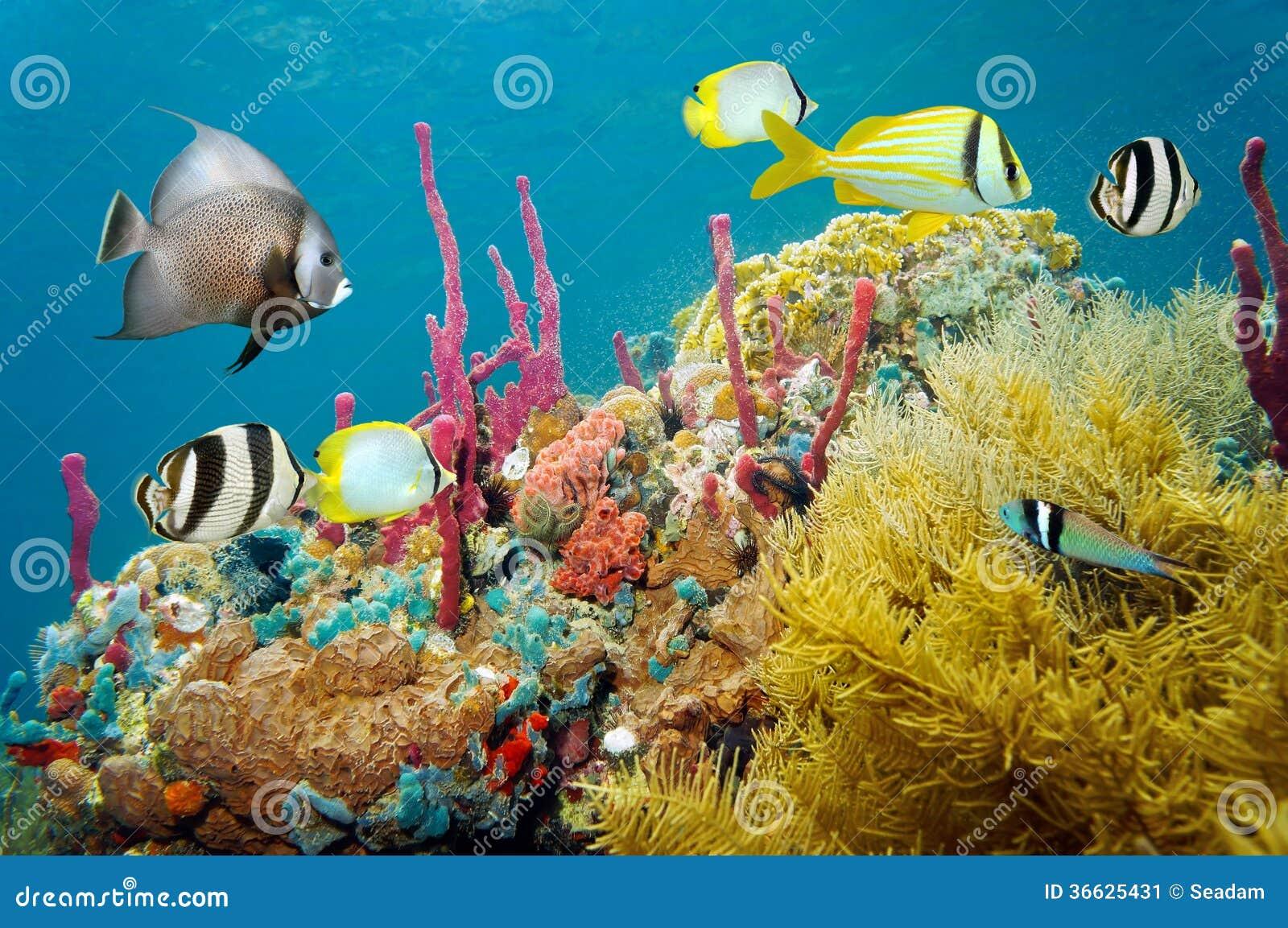 Vida marina subacuática coloreada en un arrecife de coral