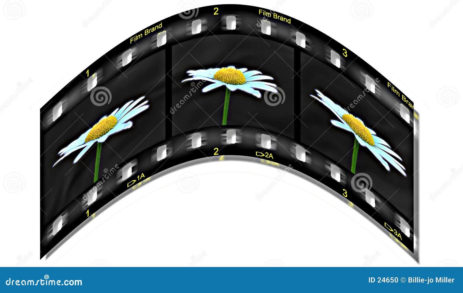 Vida na película
