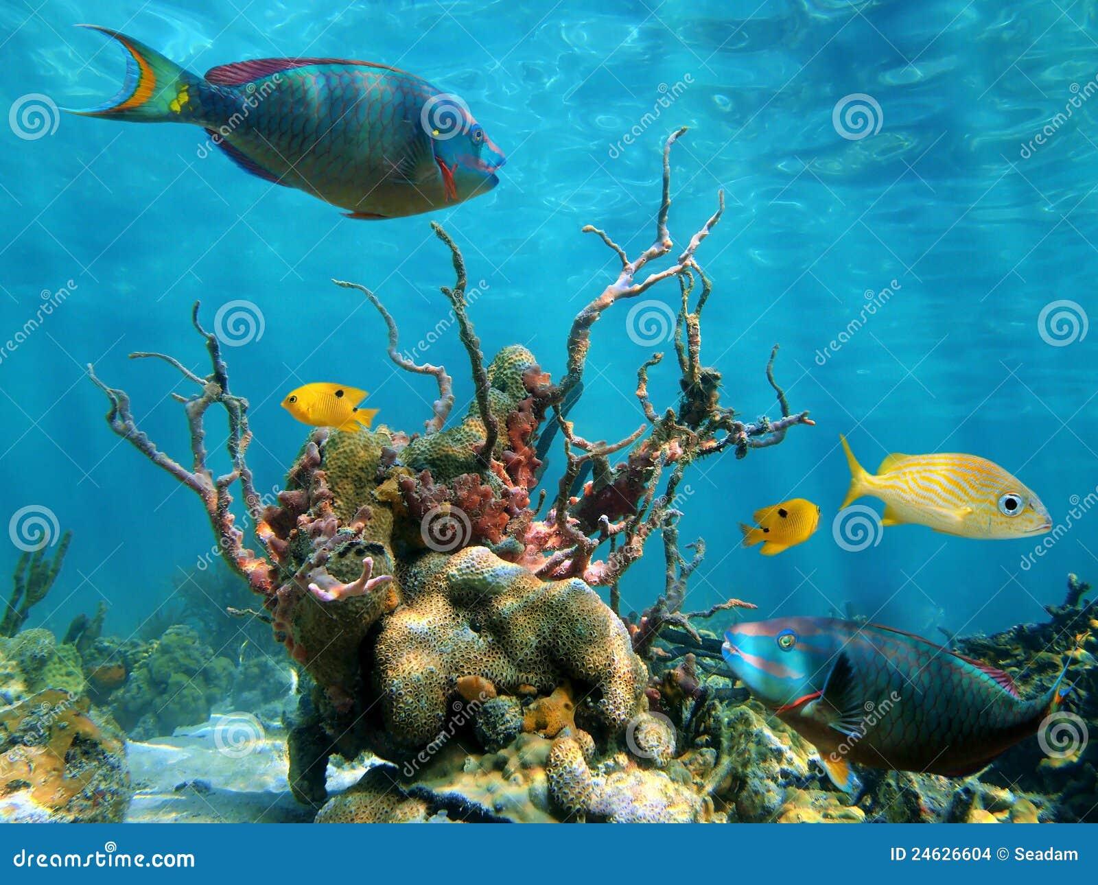 Vida subaquática do formulário e de mar