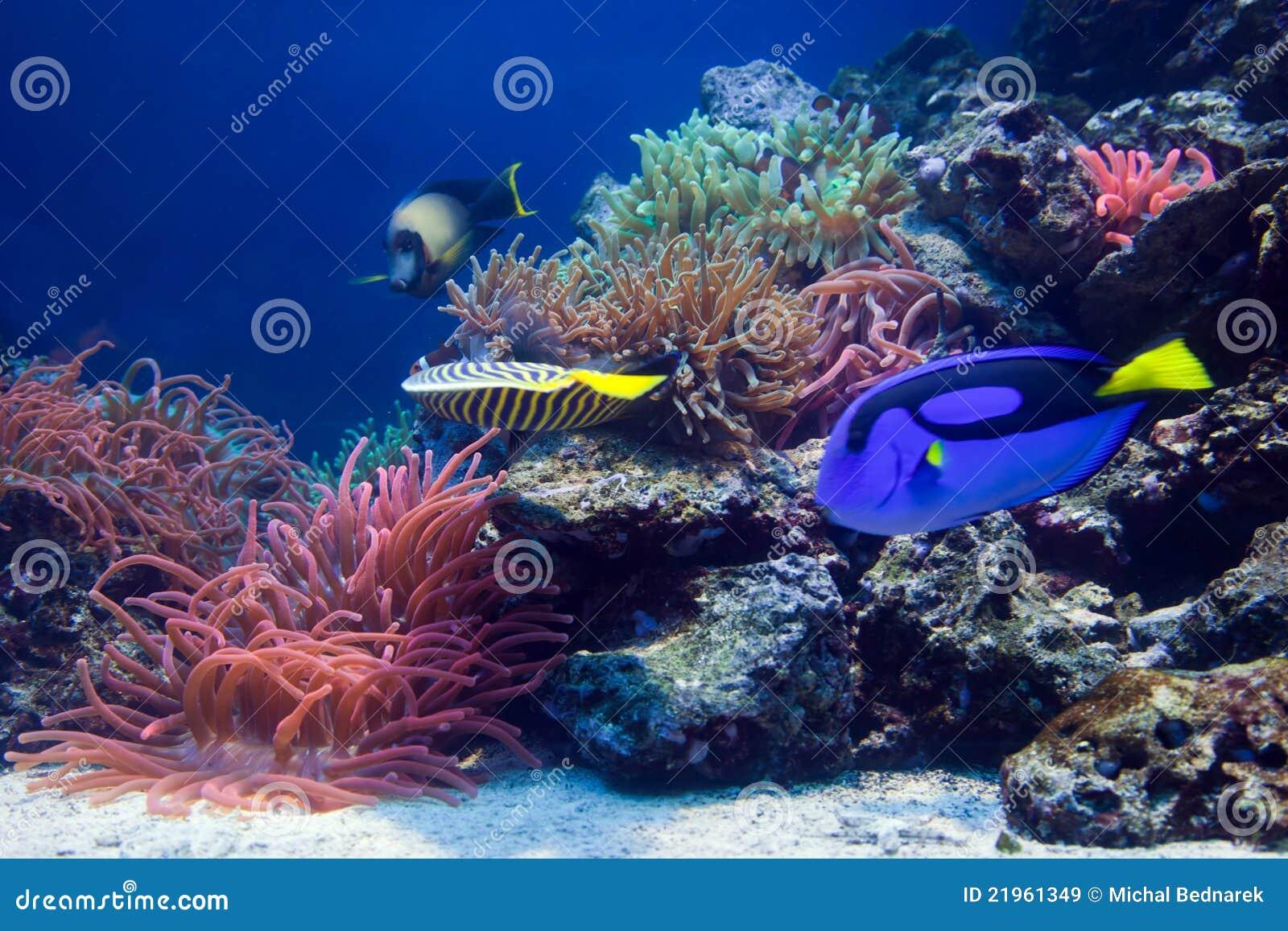 Vida subaquática, peixe, recife coral