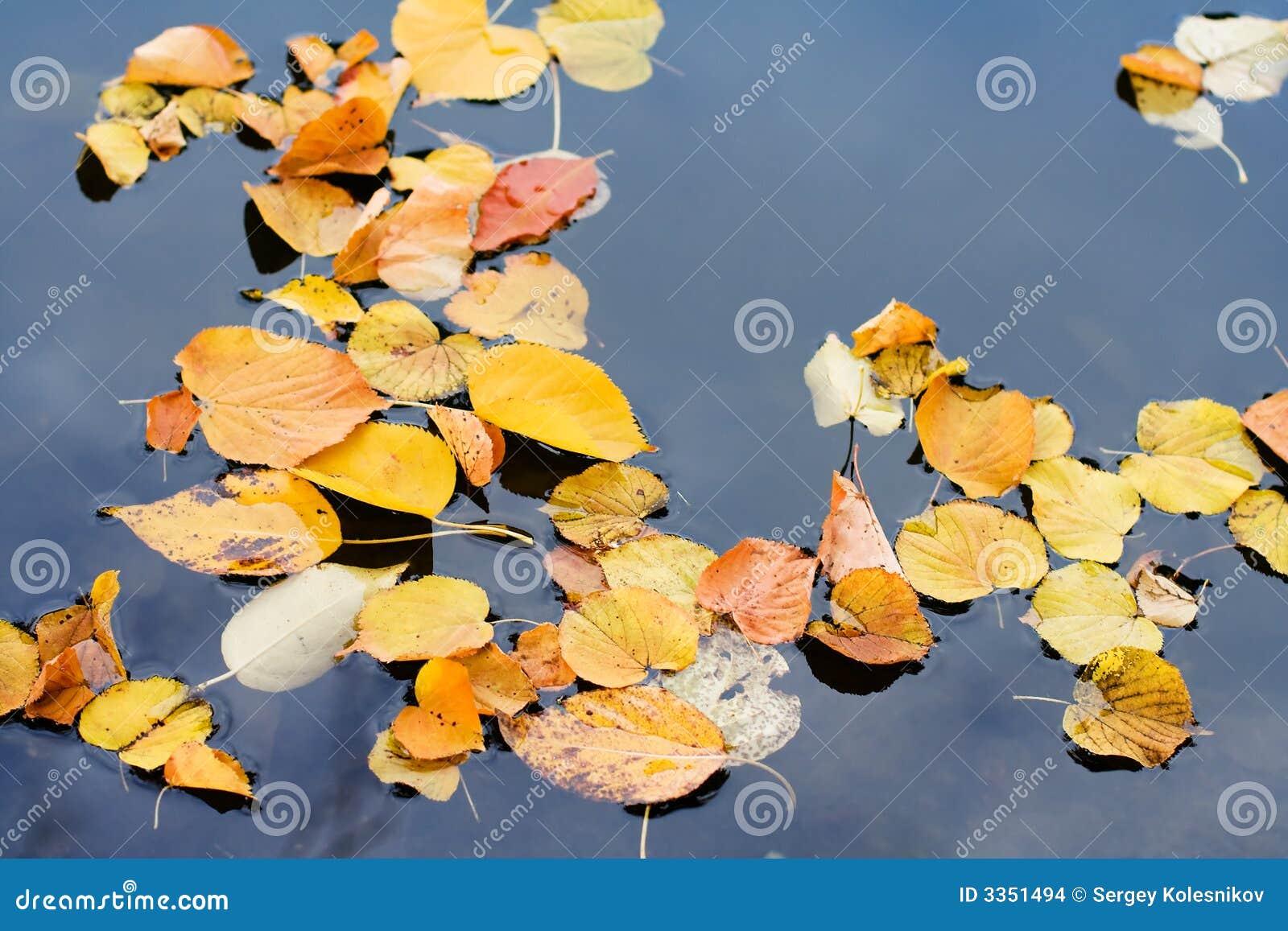 Vidas do outono