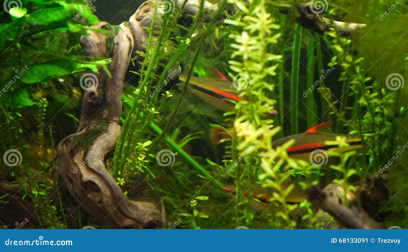 Video Aquarium Fish Swimming In A Large Aquarium Stock Video Video