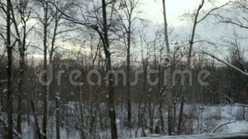 Video shooting of winter forest from the window of a moving car or train   The camera moves past trees, shrubs covered with snow,   Drifts, dark