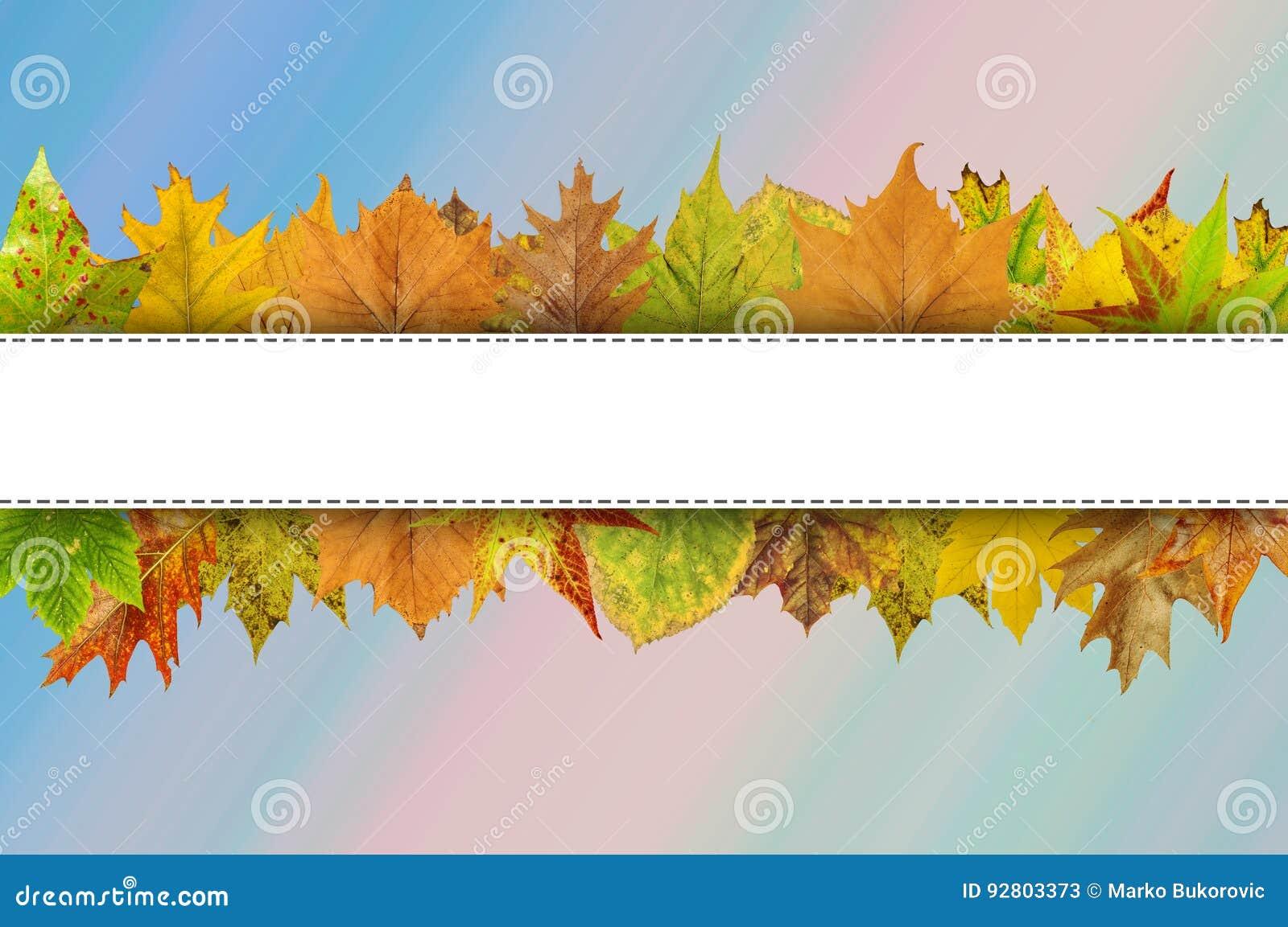 Videz la ligne blanche pour la typographie heureuse de thanksgiving sur des feuilles d automne