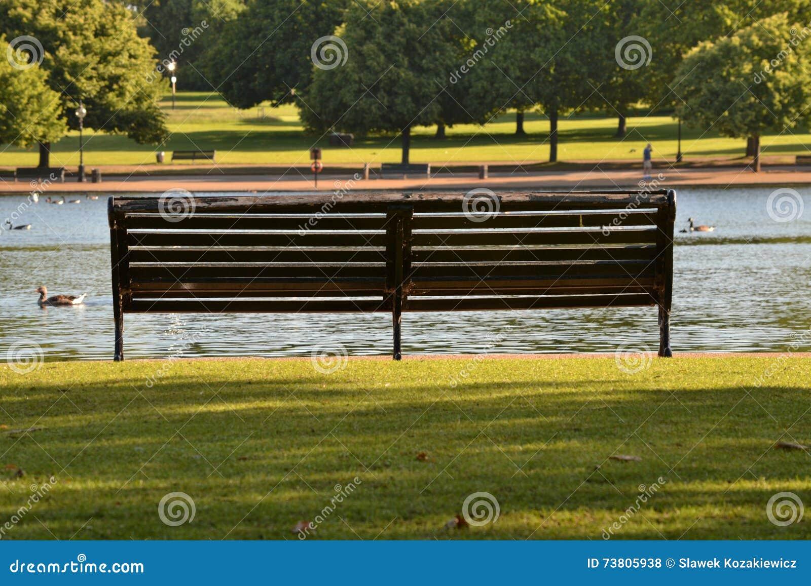 Videz le parc ensoleillé vert d été de banc
