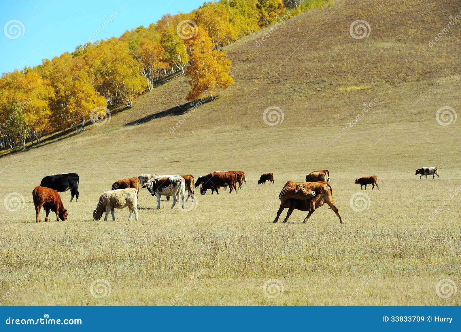 Vieh auf dem Grasland