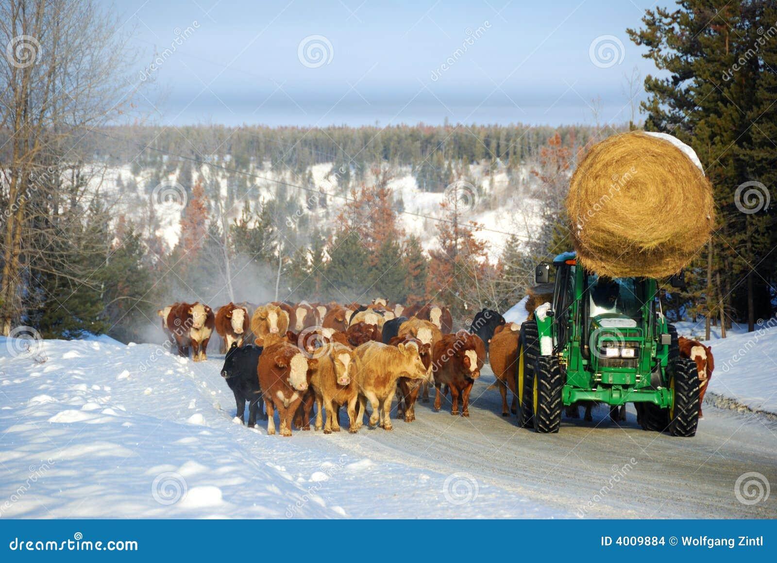 Viehlaufwerk