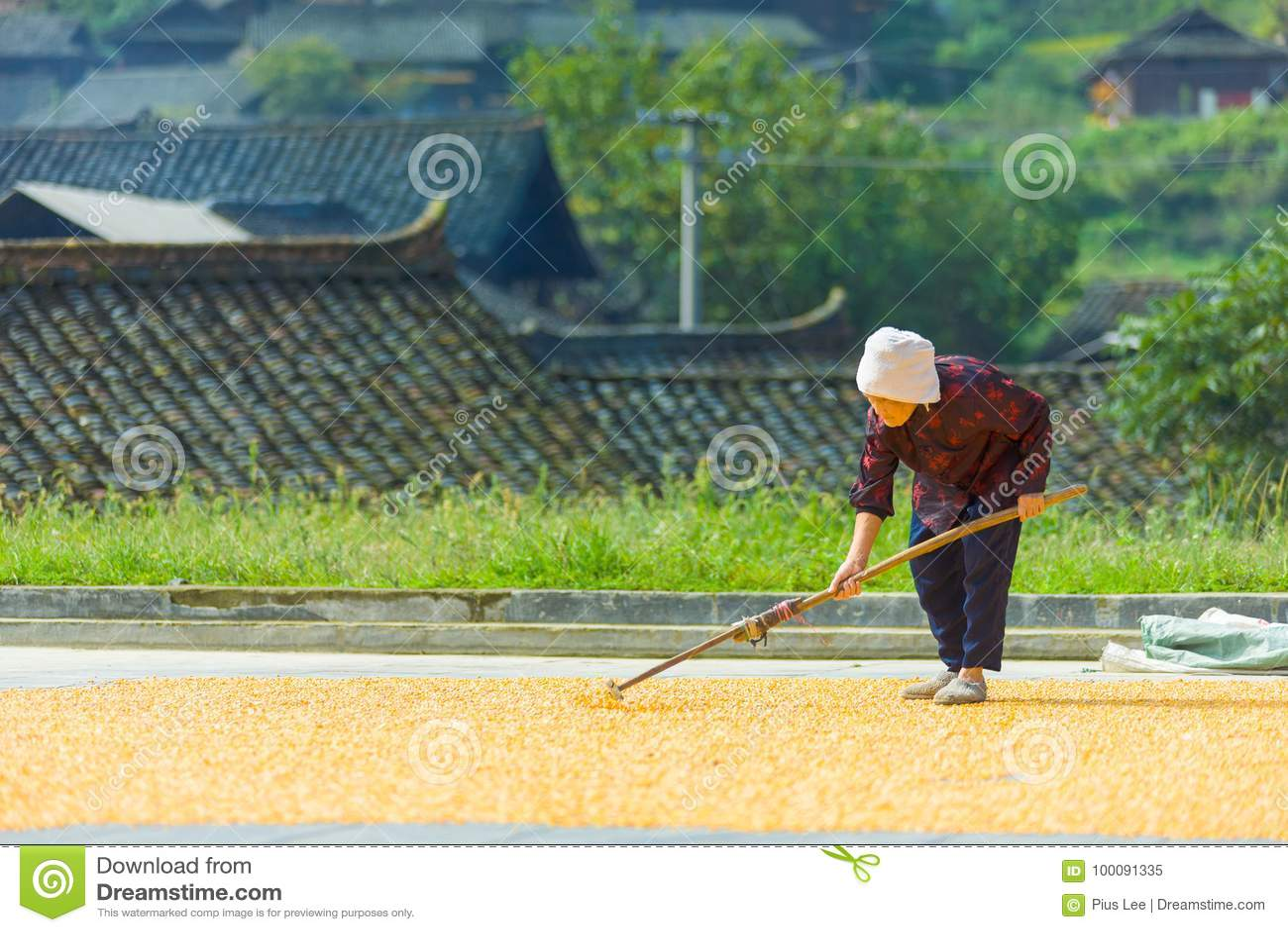 Vieil agriculteur féminin chinois Drying Corn Village
