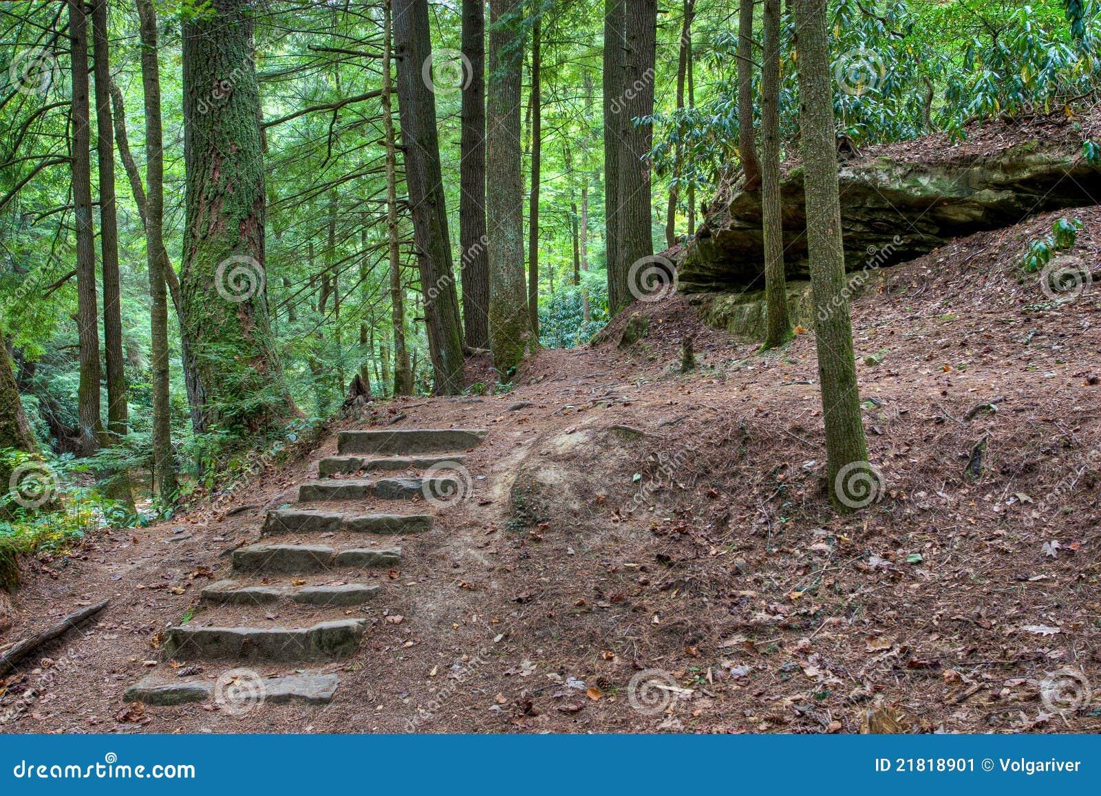 Vieil escalier en pierre dans les bois mystiques image stock image 21818901 - Vieil evier en pierre ...