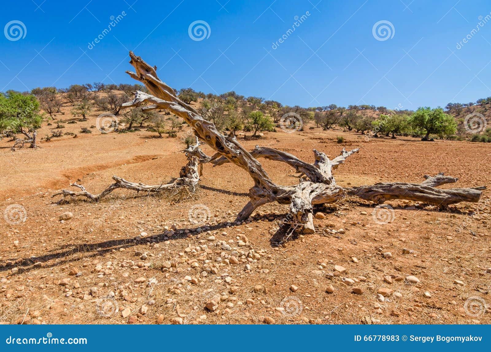 Vieille branche en bois sur le sable dans le d sert photo for Achat branche bois