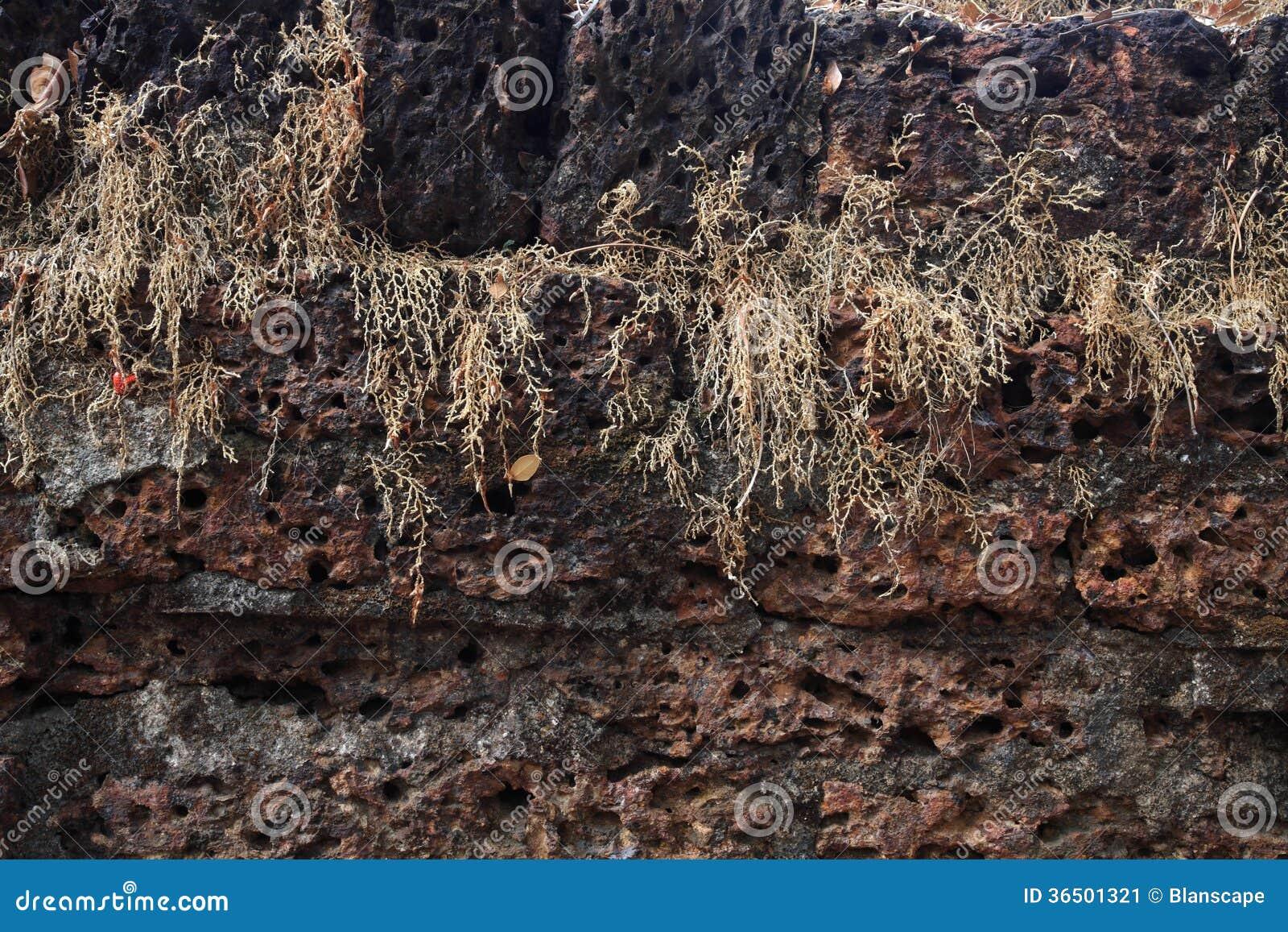 Vieille brique de pierre de latérite wal
