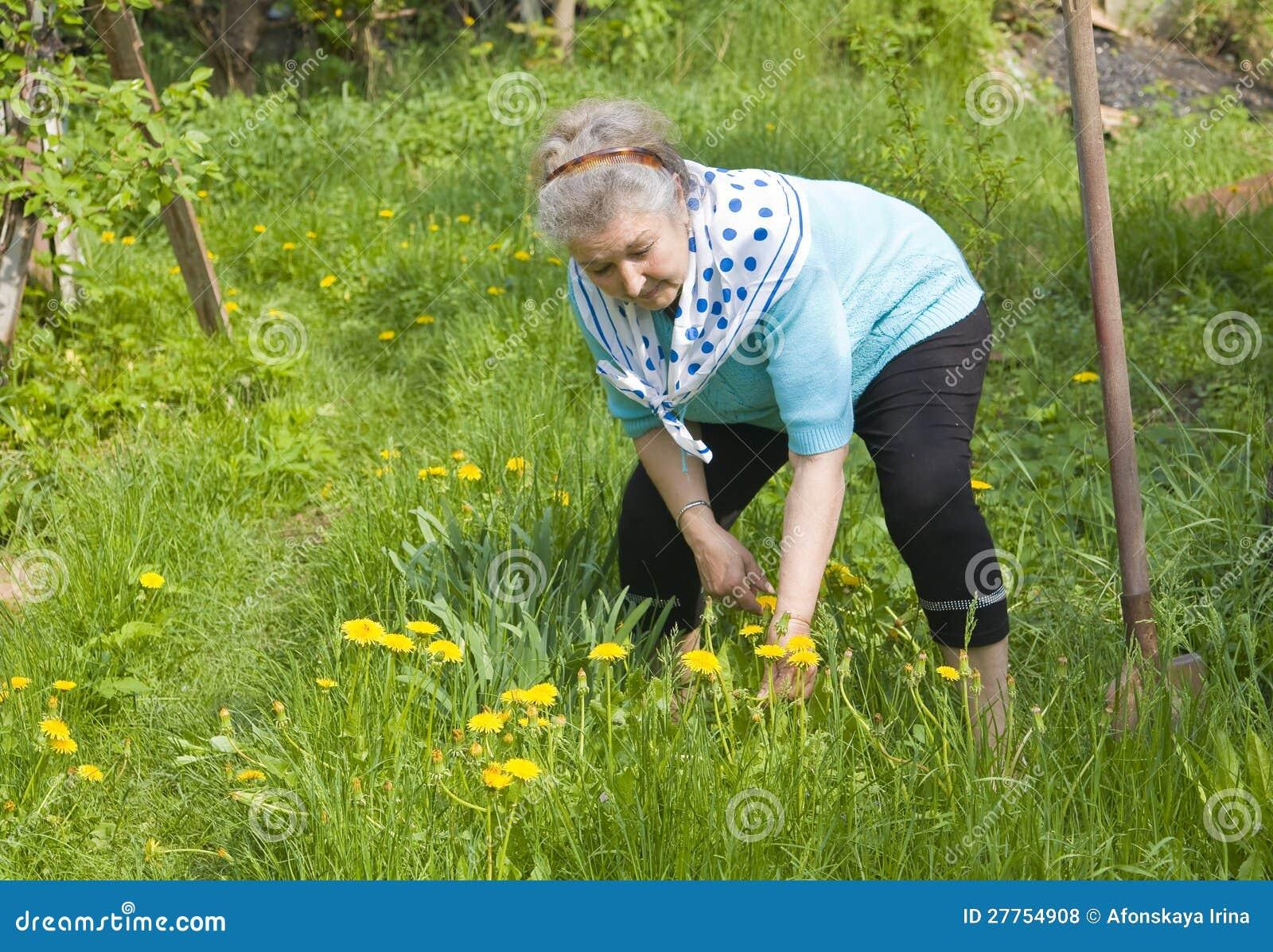 Vieille dame travaillant dans le jardin